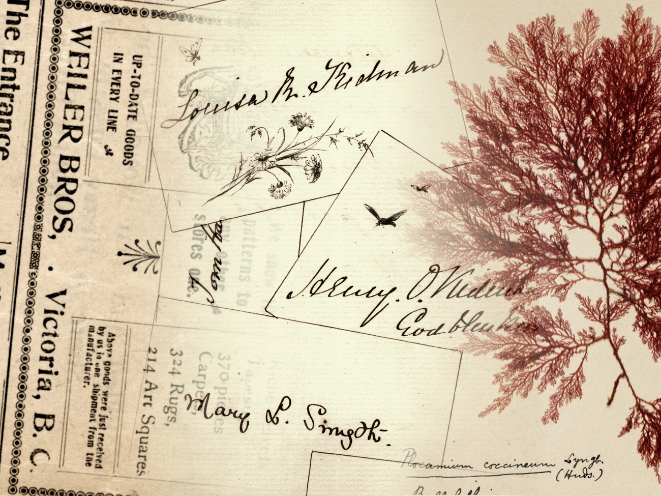 "Collections in Conversation: ""Yes, this is my album"": Victorian Collections of Scraps, Signatures, and Seaweed (digital exhibit opening event)"