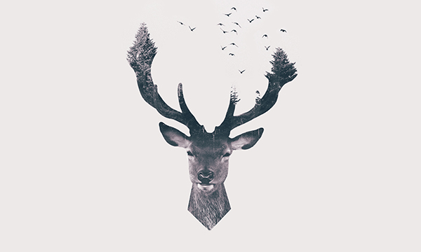 Adobe Photoshop Series: Double Exposure Deer