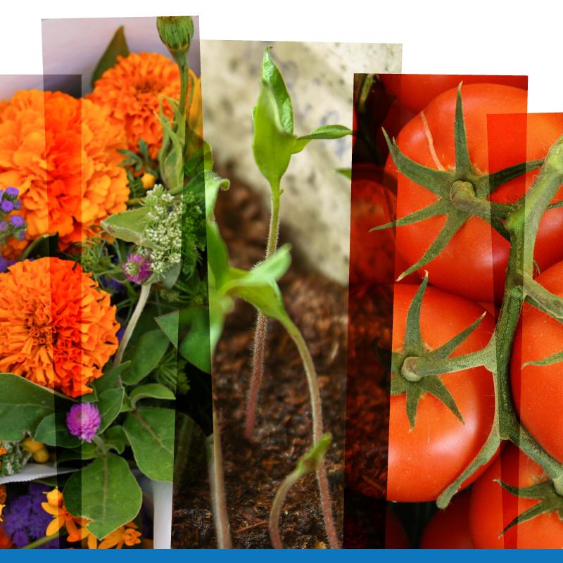 Gardening Chat